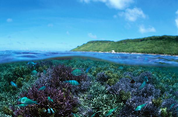 Удивительный мир коралловых рифов