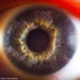 Наши прекрасные глаза (Фото)