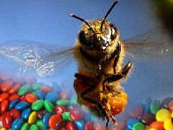 Panică în nord-estul Franţei: Albinele produc miere albastră şi verde!
