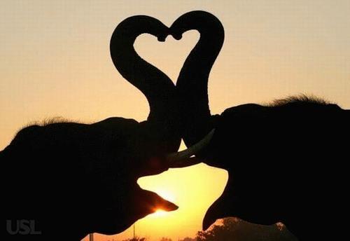 Любовь... животных (Фото)