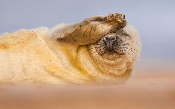 Призеры конкурса The British Wildlife Photography Awards 2012 (Фото)