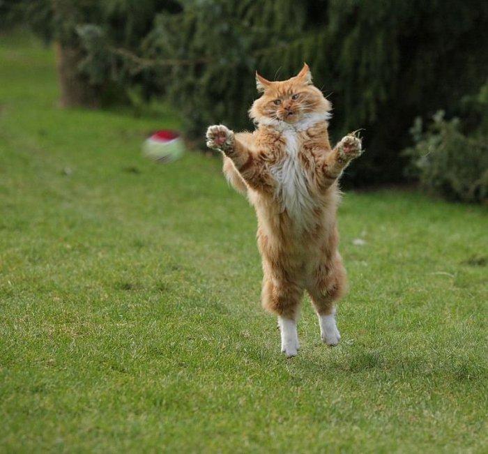 Прикольные фото животных (Фото)
