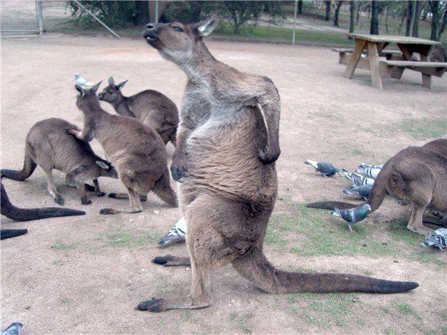 Забавные животные (Фото)