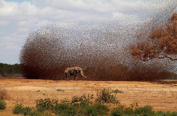 Работы на фотоконкурс National Geographic (Фото)