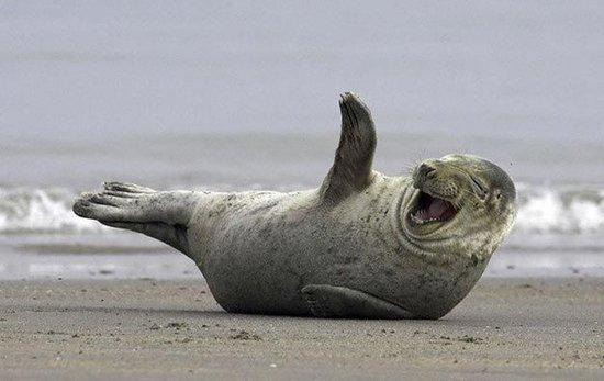 Фотоподборка смешных и счастливых животных (20 фото)