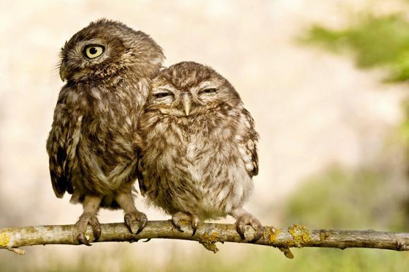 Păsări haioase (Foto)