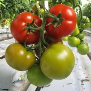 В пустыне производят органические продукты питания