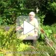 Фильм про мой сад в Интернете, съемки ландшафтного центра