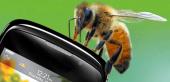 Сотовые телефоны убивают пчел?