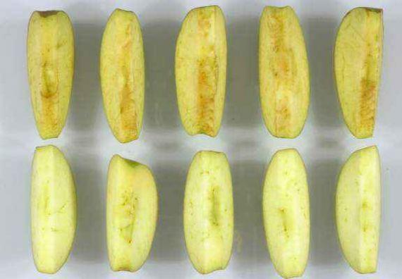 Генетически модифицированные яблоки взорвут рынок?
