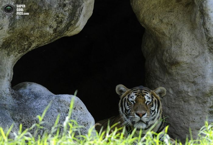 Животные из заповедника FURESA (13 фото + видео)
