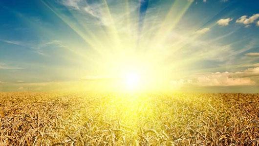 Золотоносные растения: как добыть драгоценный металл из почвы