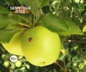 Без обмана. Запретный плод (Видео)