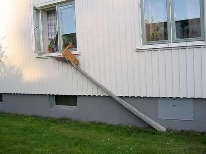 Отдельный вход для кота от изобретательных хозяев (10 фото)