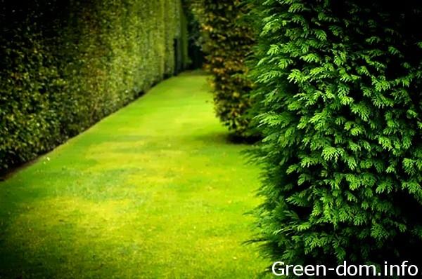 Cum să alegem plantele pentru un gard viu
