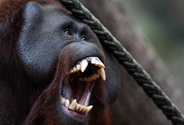 Большая июньская фотоподборка про животных (Фото)