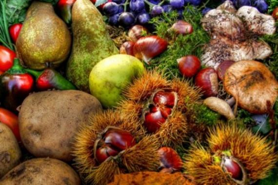 Лесосад - зеленое разнообразие (+Видео)