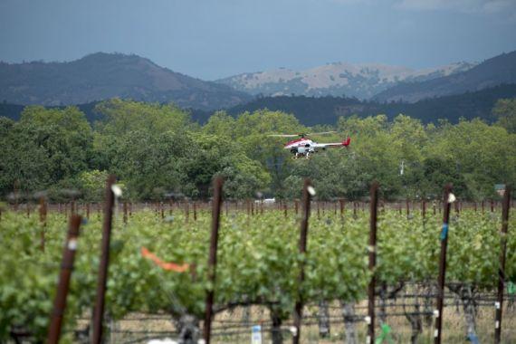 Беспилотный вертолет обрабатывает виноградники