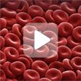 Исследование живой капли крови