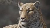 A fost descoperit cel mai vechi strămoş al marilor feline (+Foto)