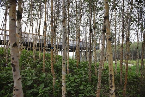 Уникальный Экопарк в Харбине