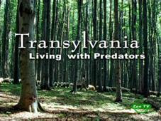 Трансильвания. Опасные соседи