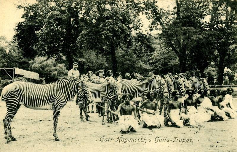 Негры в зоопарках Европы