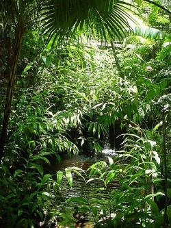 Новые виды, обнаруженные в тропическом лесу Суринама