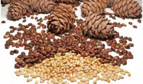 Названы орехи, которые положительно действуют на работу сердца