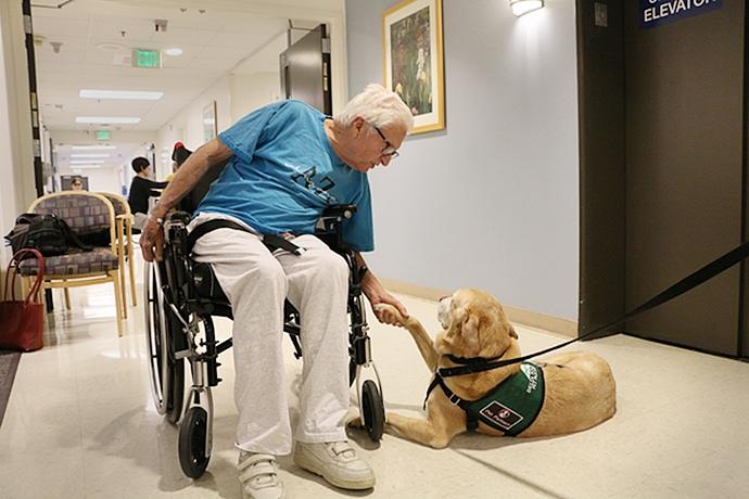 Кот и собаки помогают больным детям Портленда
