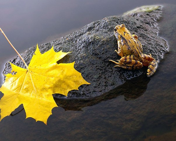 Польза лягушек и ящериц в пермакультуре