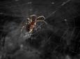 Чем полезны пауки