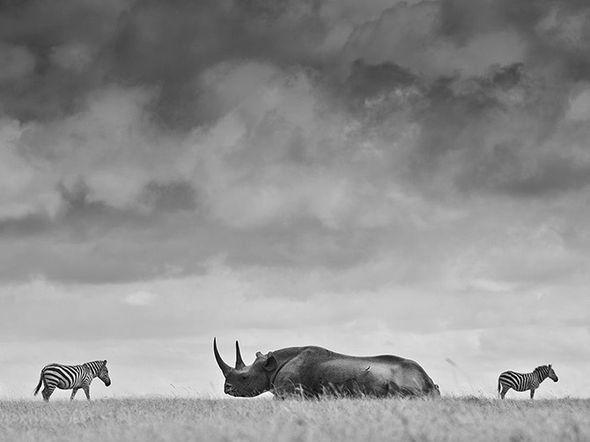 Обитатели животного мира нашей планеты