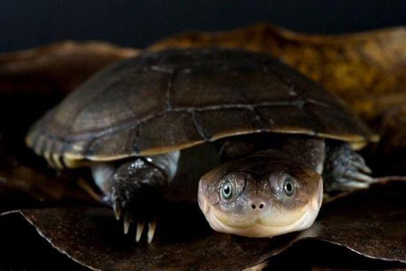 Причудливые черепахи