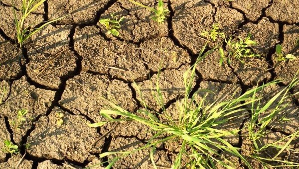 За 40 лет уничтожено почти треть биоресурсов Земли