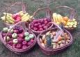 свежие фрукты в офисы