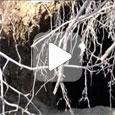 медведь во время зимней спячки