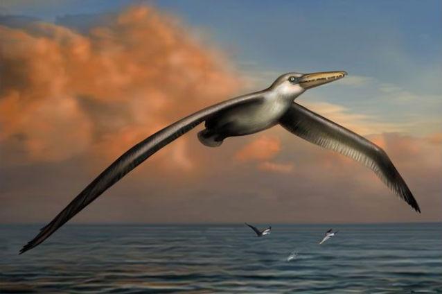 тайна полета крупнейшей птицы в истории