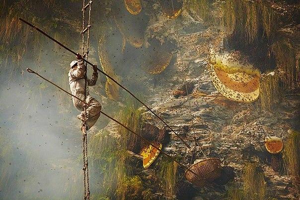 Непальские охотники за мёдом
