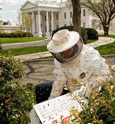 Обама спасает пчел