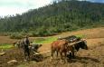 Бутан переходит на органическое сельское хозяйство