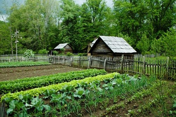 О пользе своего огорода