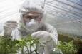 Экологические проблемы связанные с ГМО