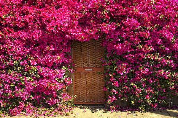 Двери из которых выходит волшебство