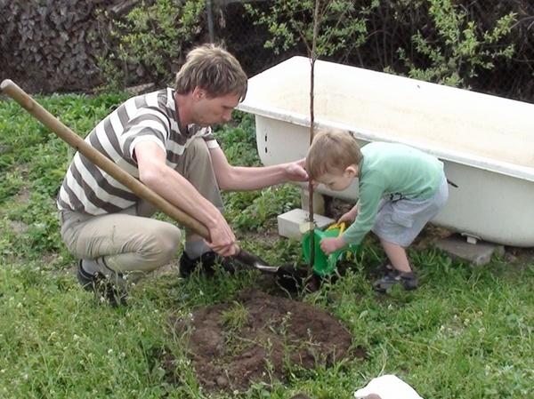 Как и когда правильно посадить дерево