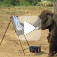 Слоненок рисует себя
