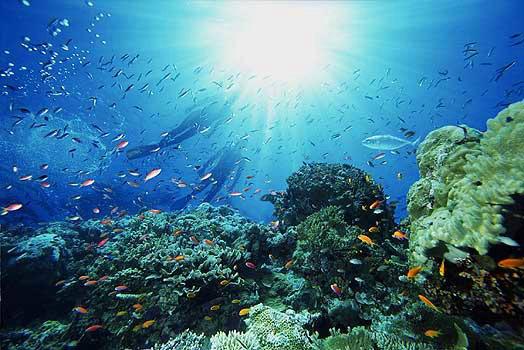 Самое чистое море