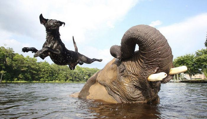 Prietenia neobișnuită a elefantului și câinelui (+Video)