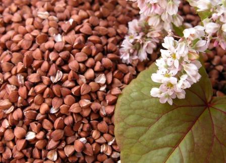 Семена гречихи – и пища и лекарство