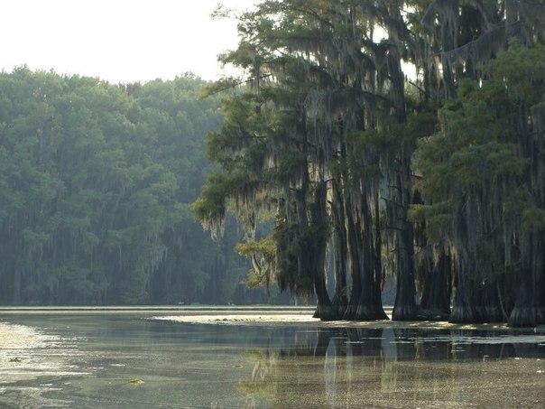 Необычные кипарисы с озера Каддо
